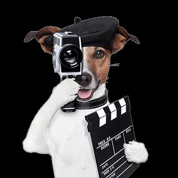 Videograf Köln